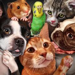 Pet Group