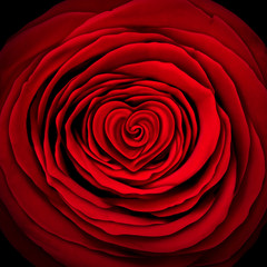 Love Rose Concept
