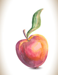 Watercolor vector apple. Vintage apple.
