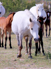 White Wildhorse