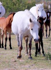 White Wildhorse