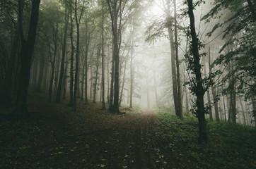 green dark forest path
