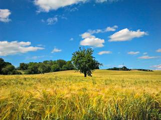 Baum in einem Getreidefeld