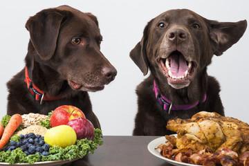 Food diet for pets - fototapety na wymiar
