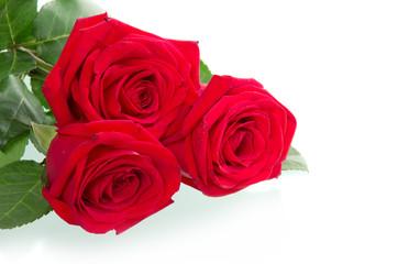 Beautiful three red roses