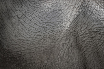 Elephant skin background in grey color