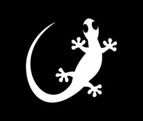 white lizard on black background