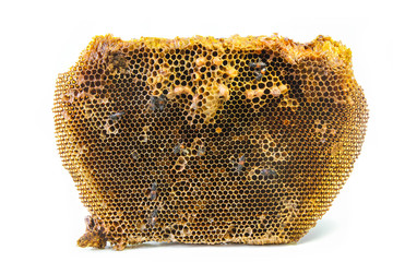 Beehive and the dwarf honey bees on white background