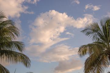 Wolken und Palmen