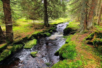 Creek in Wilderness from Mountains Sumava, southern Bohemia
