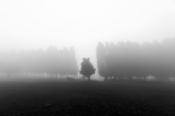 Wall Mural - black and white foggy forest