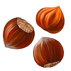 hazelnuts vector illustration  hand drawn  painted watercolor