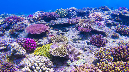 underwaterscape, coral reef