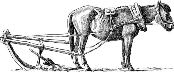 horse on an arable land