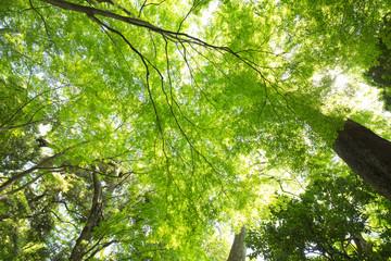 新緑の葉っぱと木々