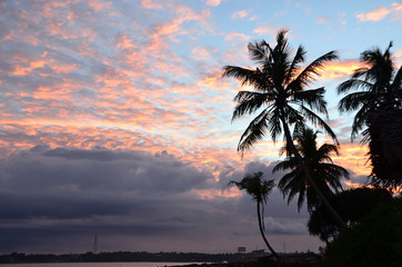 beach and blue sky with palm trees by the sea on sunset