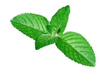 fresh peppermint leaves on white background