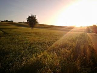 Sommerwiese im Morgenlicht