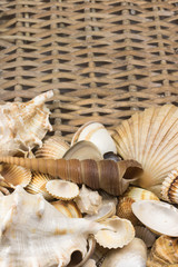 Seashells n the lower side of wicker baket. Vertically.