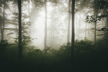 bright light in green misty forest