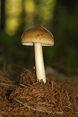 unidentified brown mushrooms