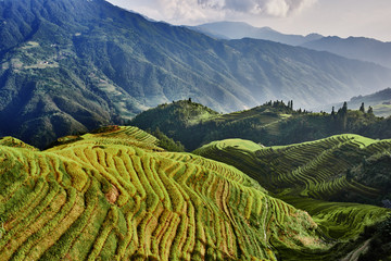Foto auf AluDibond Reisfelder rice terraced fields Wengjia longji Longsheng Hunan China