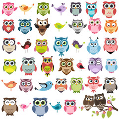 Cute owls and birds set