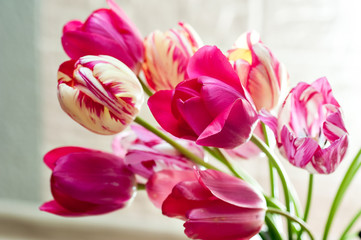 Beautiful bouquet of tulips for greeting card