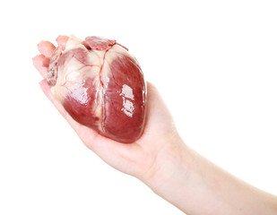 Heart in female hand isolated on white