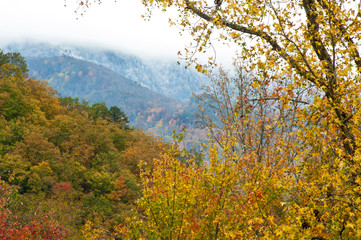 Changing seasons from fall to winter in the Smokies.