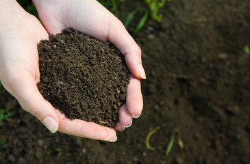 Handful of black soil above ground
