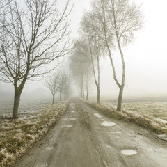 Road running between the trees in fog