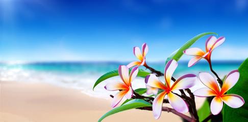 Printed kitchen splashbacks Plumeria plumeria flowers on the beach