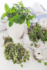 Fresh green herbs - thyme and oregano