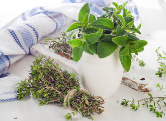 Thyme and oregano.