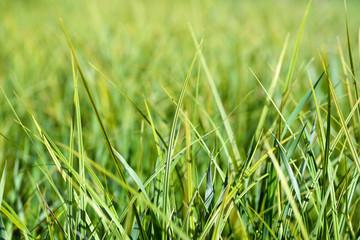 Grass/Grass