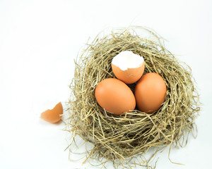 Broken empty egg nest and other two