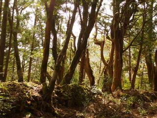 Secret of forest