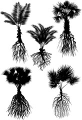five palm silhouettes with roots isolated on white