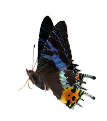 side view of blue and orange butterfly