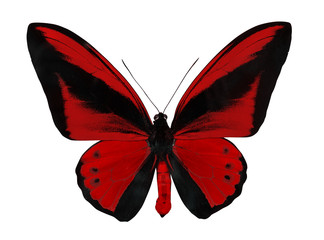 red single large isolated butterfly