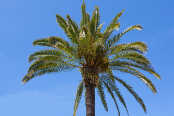 Palm tree over a clear blue sky