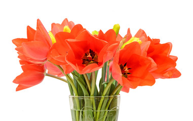 Red tulips flowers, floral arrangement, transparent vase.