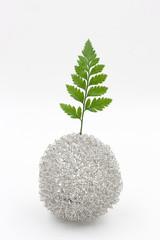 fern leaf in vase on white background