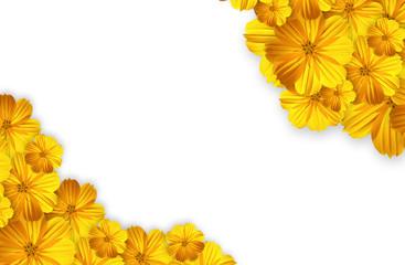 marigold flower isolated on white background
