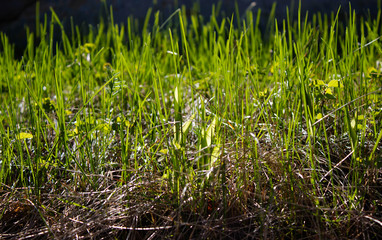 beautiful nature background green grass and loose earth