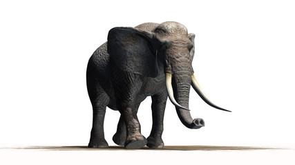 elephant - isolated on white background