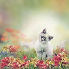 White Kitten in Flowers