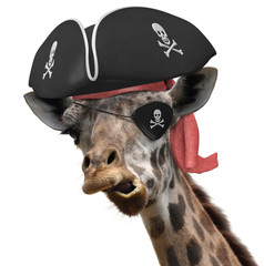 Funny animal picture of a cool giraffe wearing a pirate hat