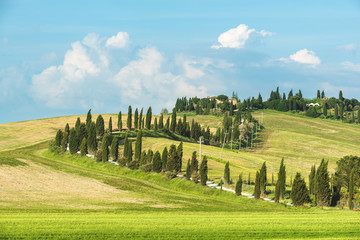 Wall Murals Melon Winding road surrounded by cypress trees in the summer sunny day